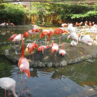 王子動物園に行く 2020年6月9日