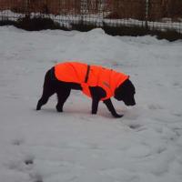 15歳2ヶ月雪の上を歩くエバりん♪