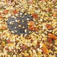 もう秋です!始めての感動で飽きないように!