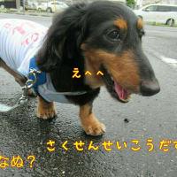 もしかしてだけど~♪お散歩好きじゃない?