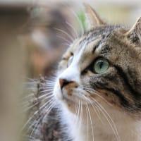私の好きな猫ちゃん