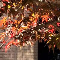 秋を感じてください