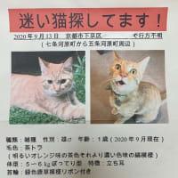 猫を探して!!!