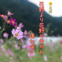 俳句ポスト365 兼題【 花野 】