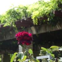 植物園を散歩