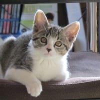 招き猫(開運招福2)