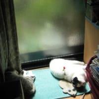 ひさびさの猫登場!