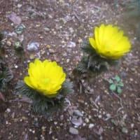 春を告げる草花