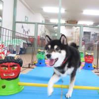 1月18日も【いい歯の日】?!  犬のしつけ教室@アロハドギー
