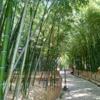上海 古猗園(gu yi yuan)
