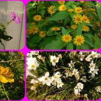 10月のMyガーデンの花