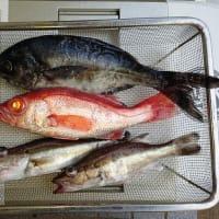 高級魚狙いで更に超高級魚が