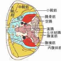 常習性便秘に関する鍼灸治療点の検討