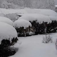 一転雪景色