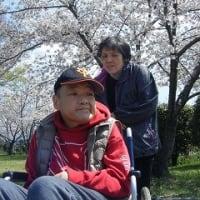 桜は満開です☆