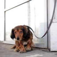 犬の『しつけ』と『虐待』の違いとは?