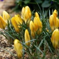 3月4月の営業予定と春の足音