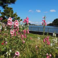 横浜海の公園~青い海と空