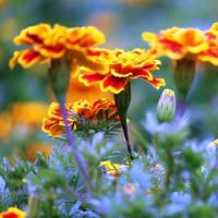 秋の花壇をにぎわす花‥③ 【ひで某】