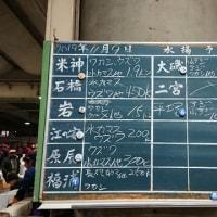小田原早川漁港で水揚げされた「カゴカキダイ」|株式会社JSフードシステム