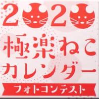2020極楽ねこ結果発表~!