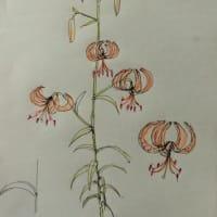 百合の花たち