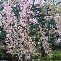 4月の東京出張