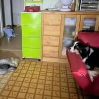 台風で浸水し、自宅2階で避難生活を送った大型犬2頭の飼い主さんが「備えていたもの」