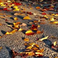 秋のたのしみ、