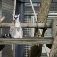 動物園で練習