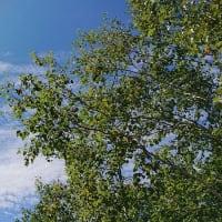 峠の我が家から撮影の秋の空