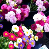 ドイツ  お花の贈り物 💐