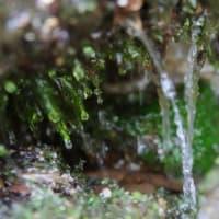 白谷雲水峡をカメラを持って娘と散策【屋久島風景写真・フォトウォーク】