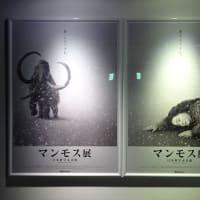 「マンモス展②」/日本科学未来館