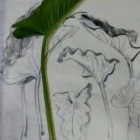 カラーの花 水墨画 墨彩画 葉のスケッチと作品