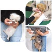 パピー教室【お手入れ頑張ろう!】を開催しました。【ALOHA塾】  犬のしつけ教室@アロハドギー