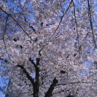 こっそりお花見ランチ〜2〜