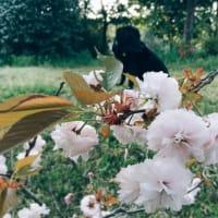 桜と....