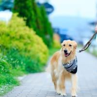 Walking Tarou(タロウの散歩)
