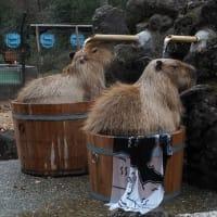 カピバラ温泉~埼玉県こども動物自然公園