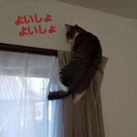 「ぼるしち 扉を開ける」