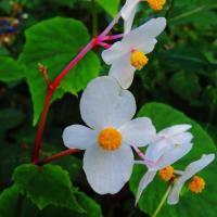 秋 卯辰山の花