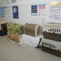 飼主の居ない猫の避妊・去勢手術3匹済み・栗橋