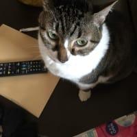 我が家の猫は知性派?