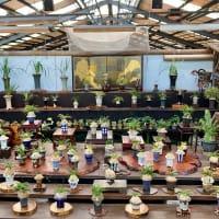 四国山草園 蘭の自慢会 展示品