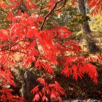 名残の秋Ⅴ