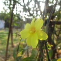 キウイフルーツ&果林&金の生る木