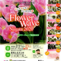 Flower Wave Niigata2020 フラワーウェーブ新潟2020