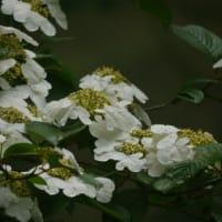 花盛りの森