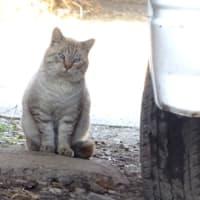 美々津海岸のレットさんと、今日出会った、犬・猫・鳥たち。